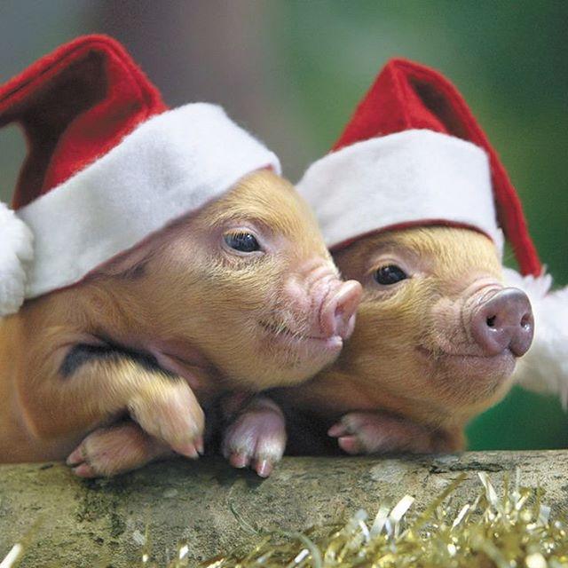 Merry Christmas from us all!! #merryxmas #happyholidays