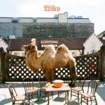 """WILCO, """"Wilco (The Album)"""" (Nonesuch, 2009)"""