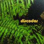 [Scoutcloud] Discodor: alla ricerca del groove perduto